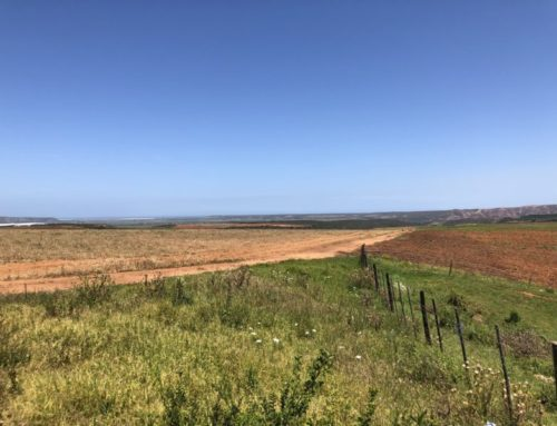 THE CLEARANCE OF VEGETATION ON PORTION  36 & 38 OF THE FARM BUFFELS HOEK NO 180
